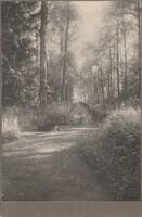 Sätra Brunn. Olovskällan. Olovsallén. Årtal 1890-t. Storlek 165x110 mm. Foto..jpg