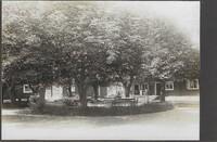 Kastanjeträden på Brunnsgården. Foto..jpg
